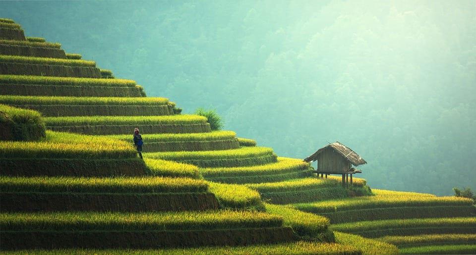 Formula For Guaranteed Success: Agriculture Translation